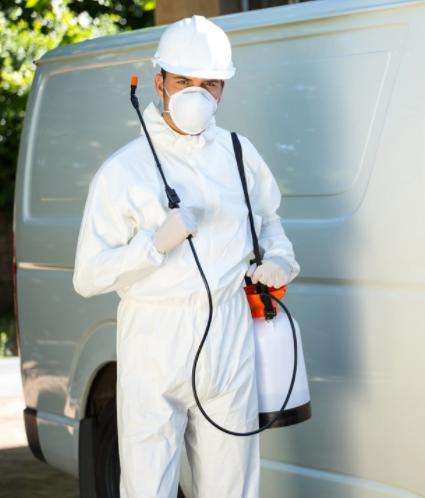 servicii deratizare dezinsectie dezinfectie bacau