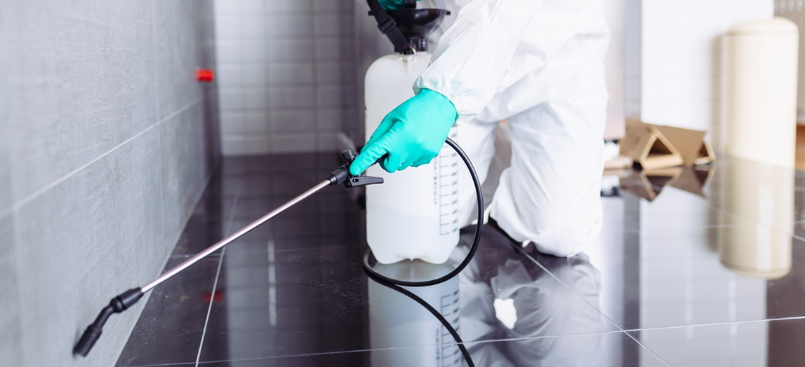 servicii deratizare dezinfectie dezinsectie pitesti