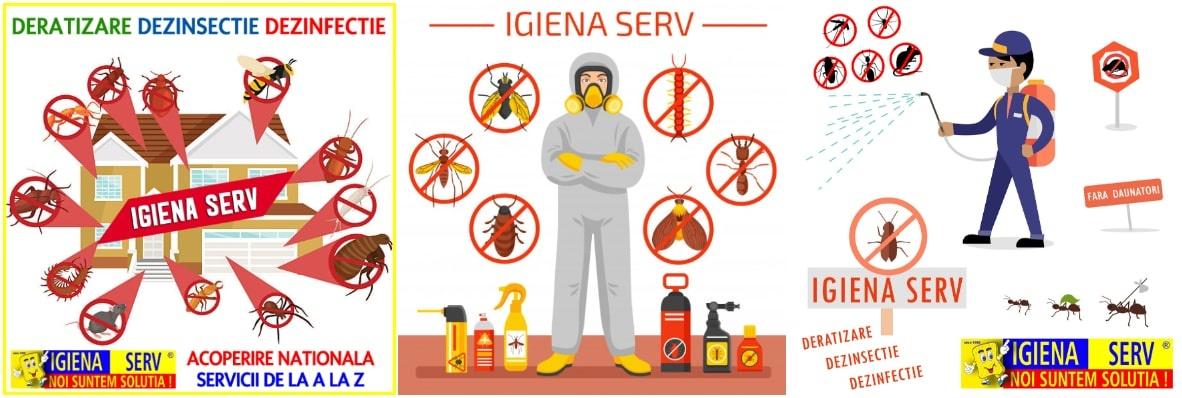 dezinsectie  deratizare-dezinfectie targoviste